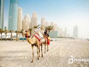 Дубай на 17 января